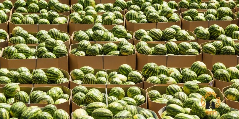exportación frutas a Francia