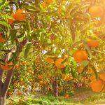 vender frutas a Francia